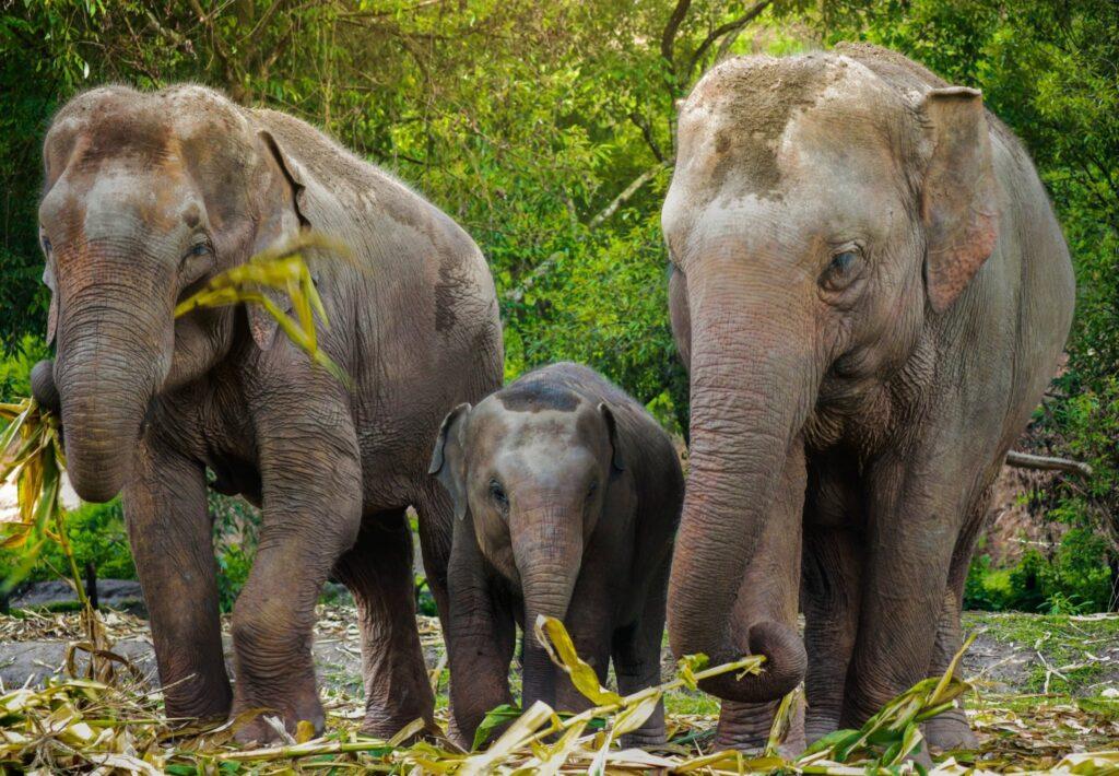 Elephants at the Elephant Jungle Sanctuary.