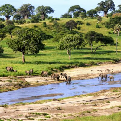 Elephants crossing a river in Serengeti National Park, Tanzania.