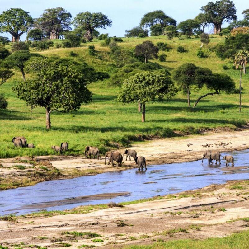 Elephants crossing a river in Serengeti National Park, Tanzania.