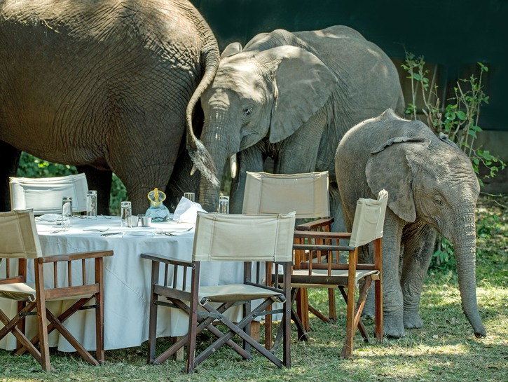 Elephants gathering around a picnic table