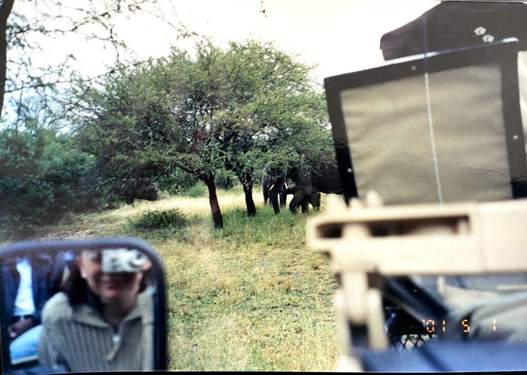 Elephants in the road, Kruger National Park.