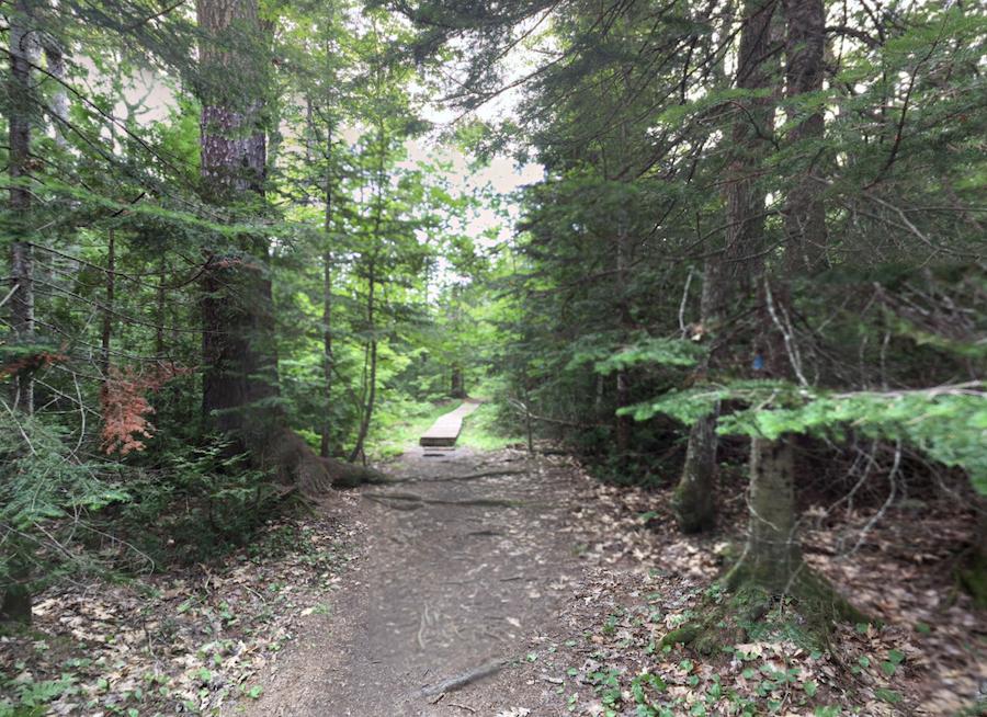 Estivant Pines Nature Sanctuary in Michigan.