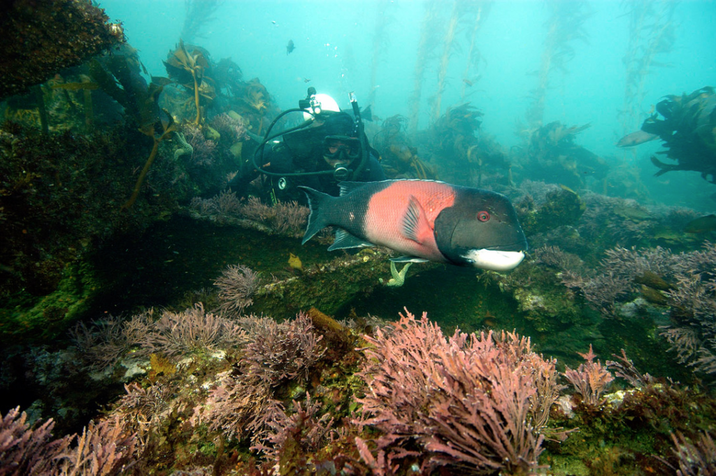 Exploring underwater in the Channel Islands.