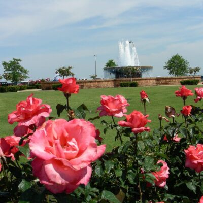 Fairhope's iconic rose garden overlooking Mobile Bay.