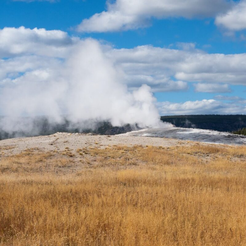 Fall colors at Old Faithful geyser in Yellowstone National Park.