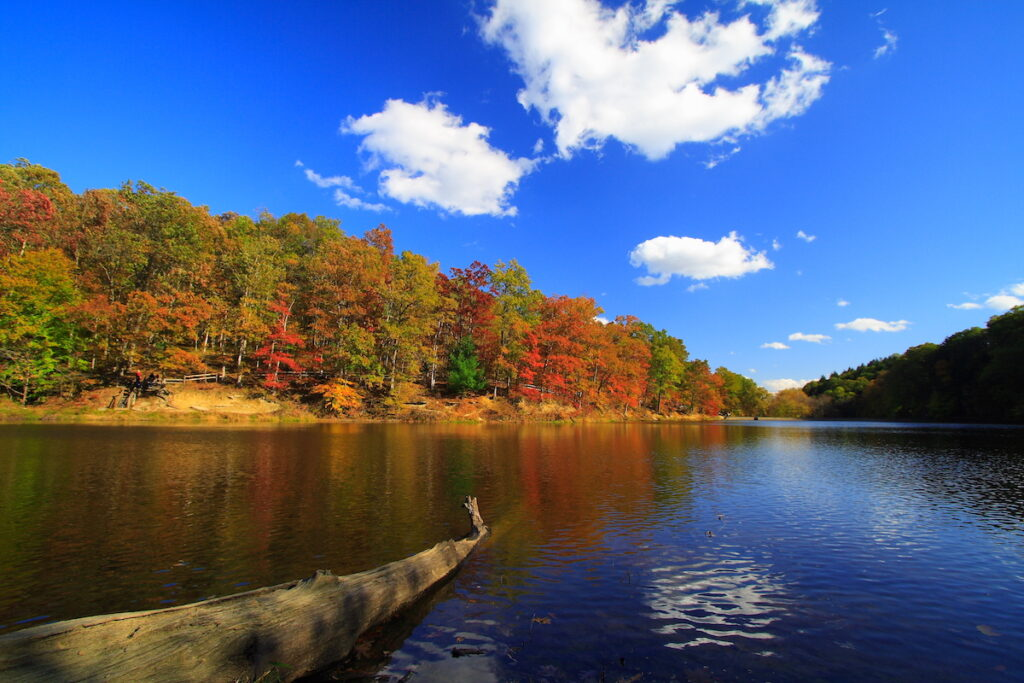 Fall colors in Brown County State Park.