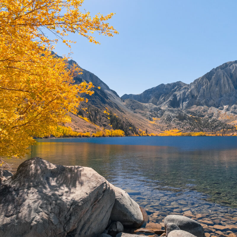 Fall colors in Mammoth Lakes, California.