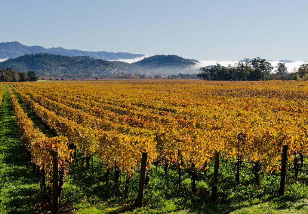 Fall colors in Napa Valley, California.
