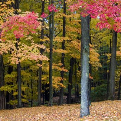 Fall folaige in Warwick, New York.