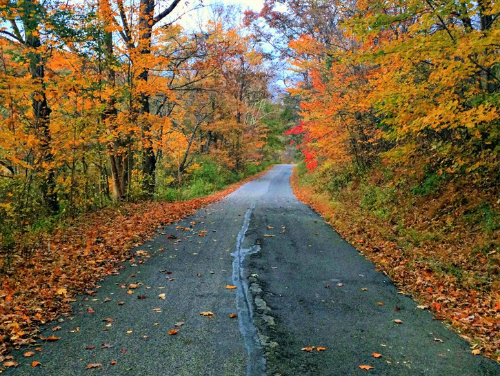 Fall foliage along an old country road