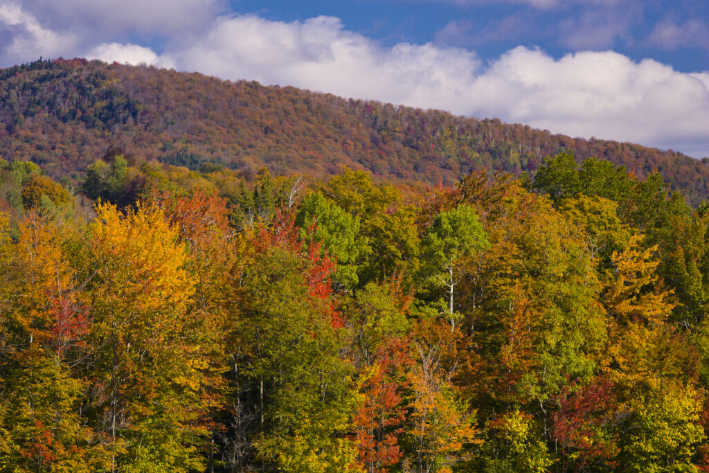 Fall foliage along Lincoln Gap Road in Vermont.