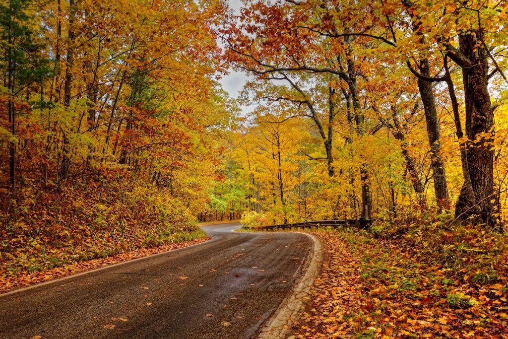 Fall foliage along Michigan 119's Tunnel of Trees.