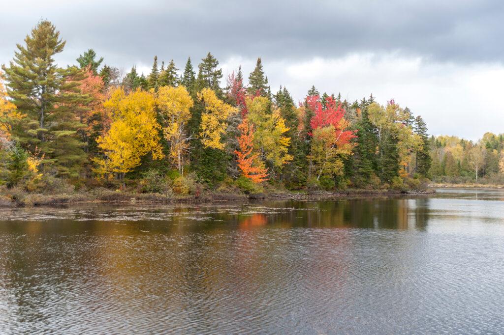 Fall foliage along the Androscoggin River.