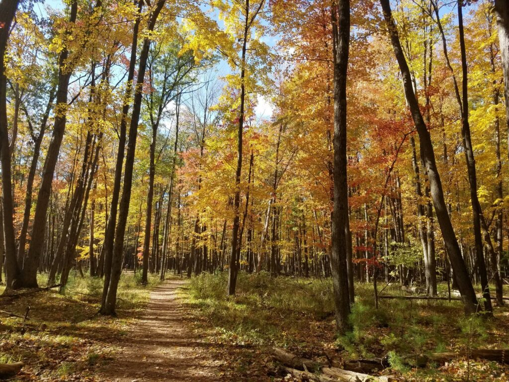 Fall foliage along the Green Circle Trail in Stevens Point.