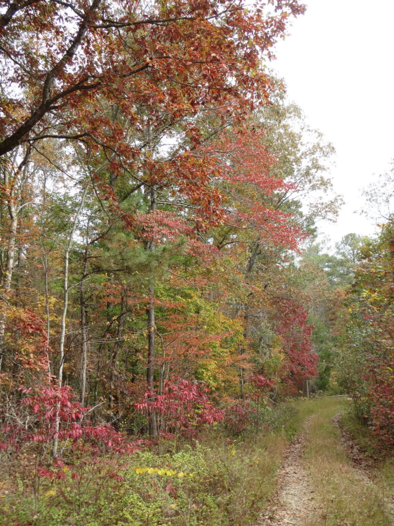 Fall foliage at Bankhead National Forest in Alabama.