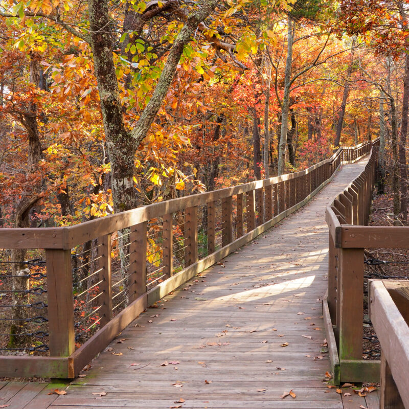 Fall foliage at Cheaha State Park in Alabama.