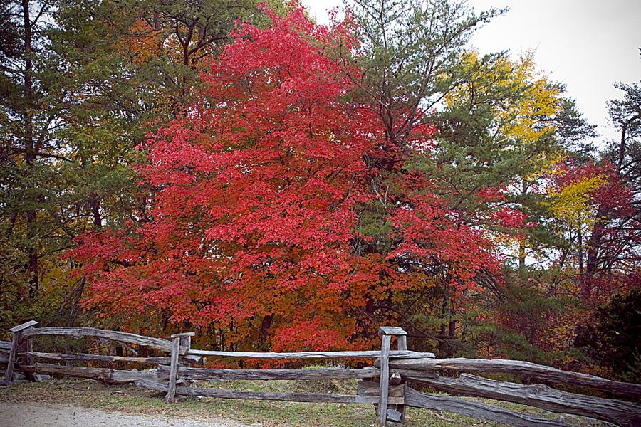 Fall foliage at DeSoto State Park in Alabama.