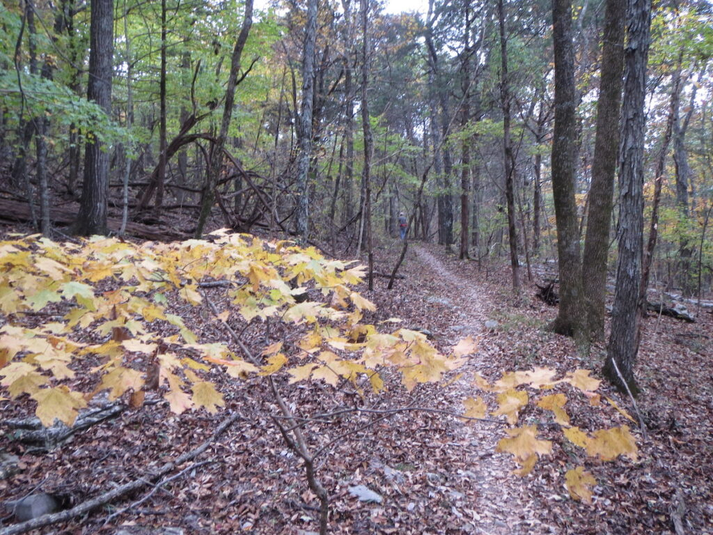 Fall foliage at Monte Sano State Park in Alabama.