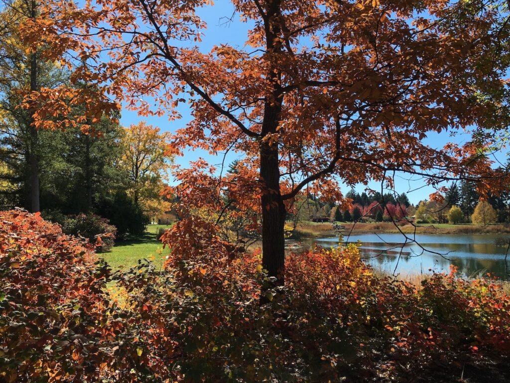 Fall foliage at the University of Wisconsin-Madison Arboretum.