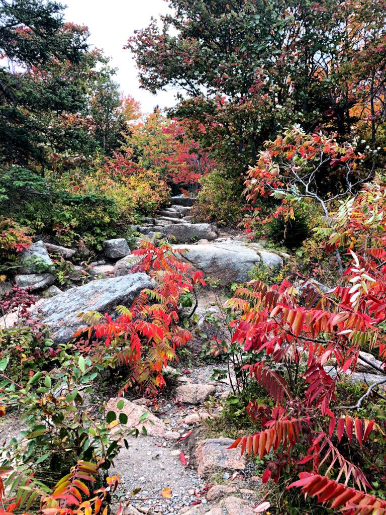 Fall foliage in Acadia National Park.