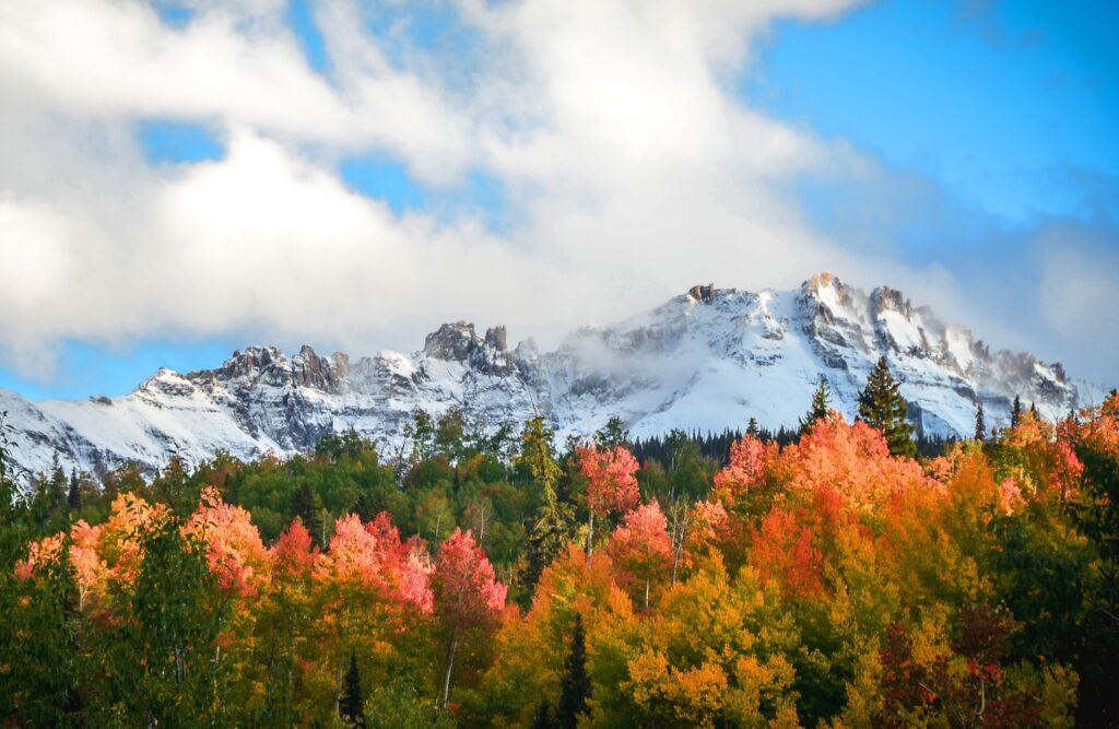 Fall foliage in Aspen, Colorado.