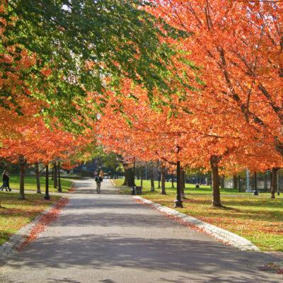 Fall foliage in Boston Public Garden.