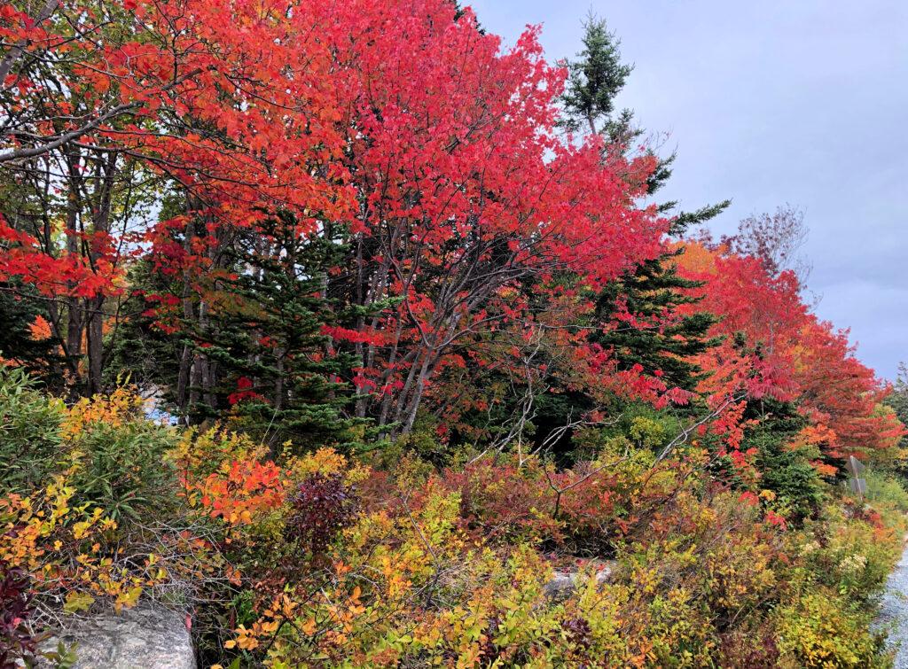 Fall foliage in Camden, Maine.