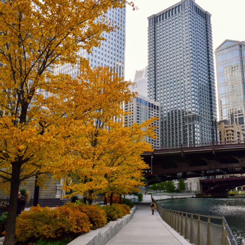 Fall foliage in Chicago during Thanksgiving.