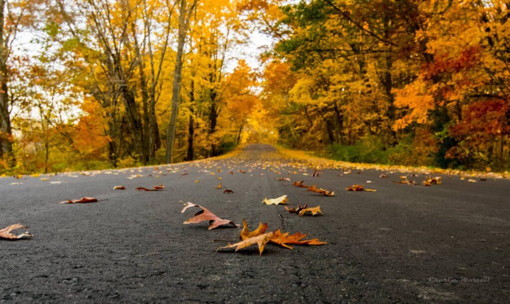 Fall foliage in Chippewa Falls, Wisconsin.