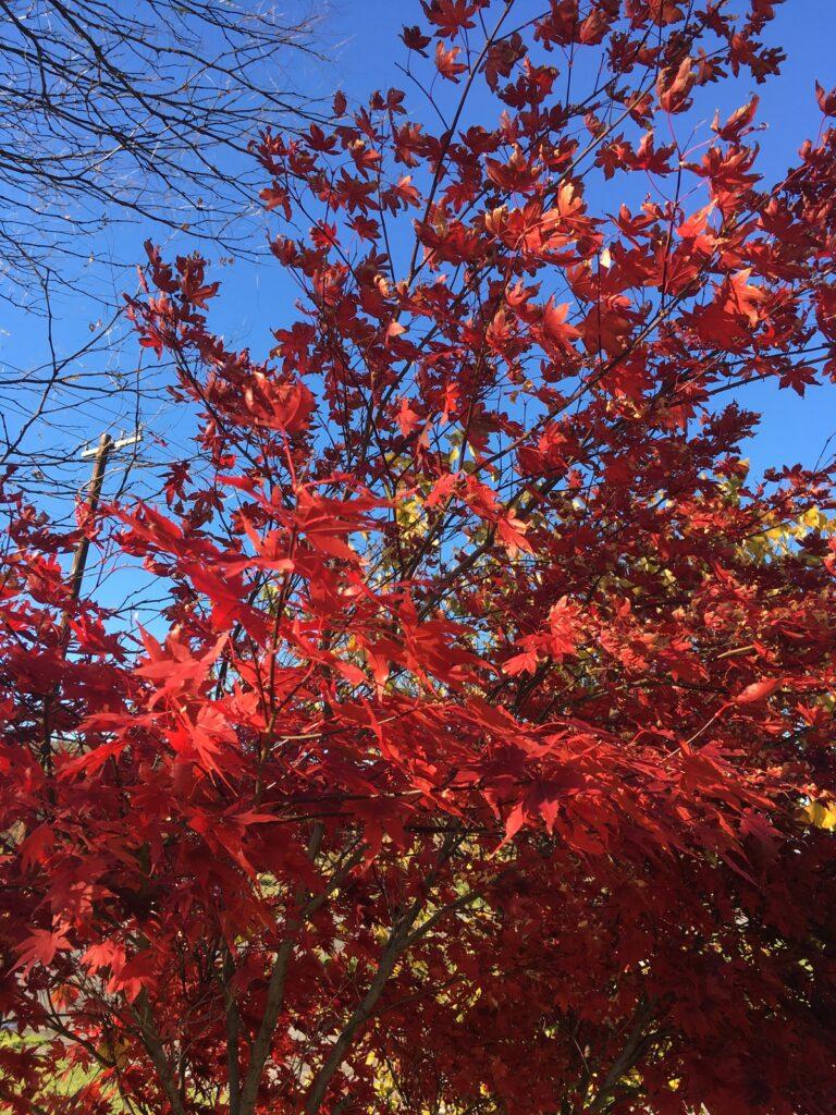 Fall foliage in New England.