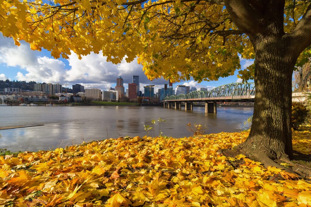 Fall foliage in Portland, Oregon.