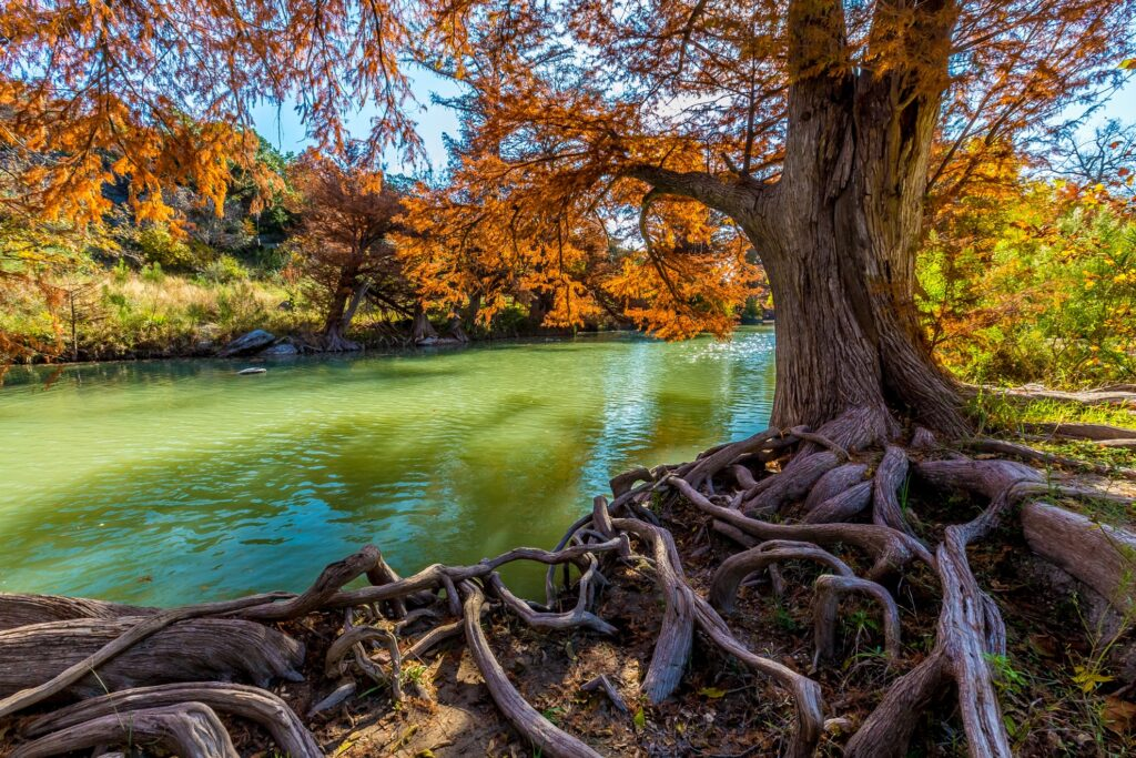 Fall foliage in Texas's Hill Country.