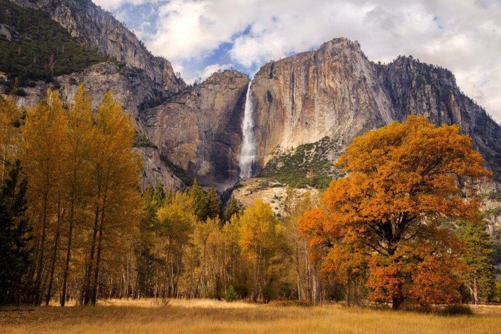 Fall foliage in Yosemite National Park.