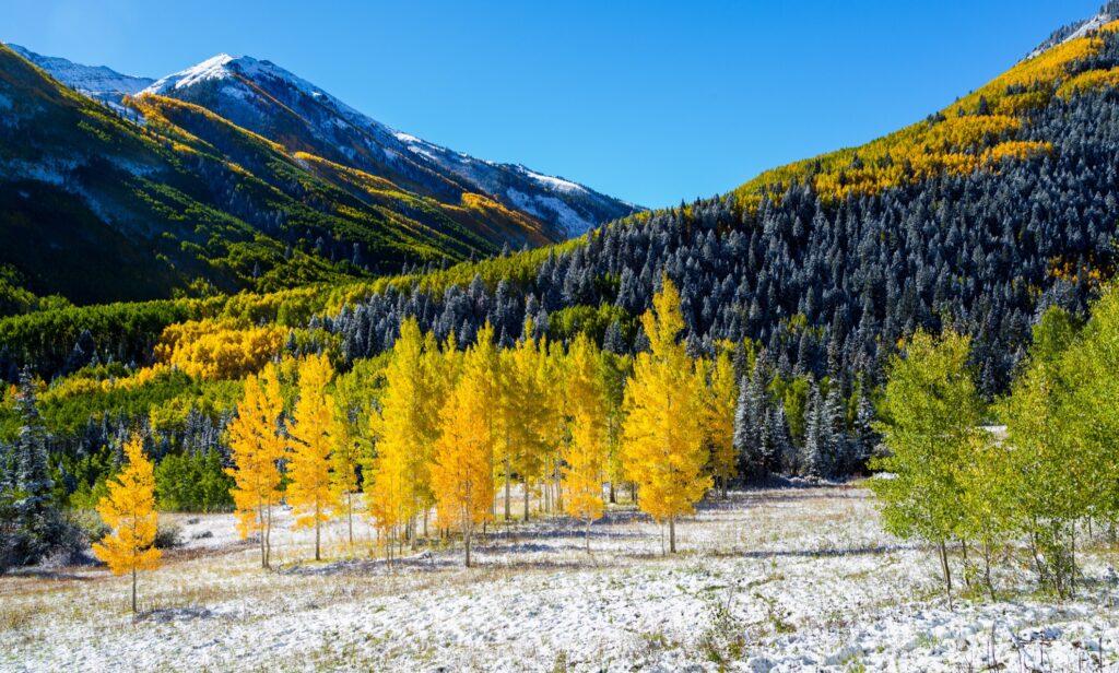 Fall foliage near Aspen, Colorado.