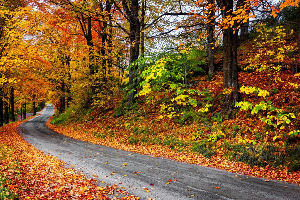 Fall foliage on a back road in Woodstock, Vermont.
