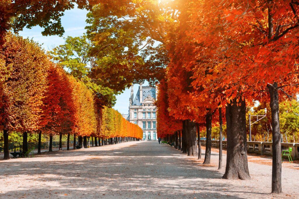 Fall leaves in Paris.