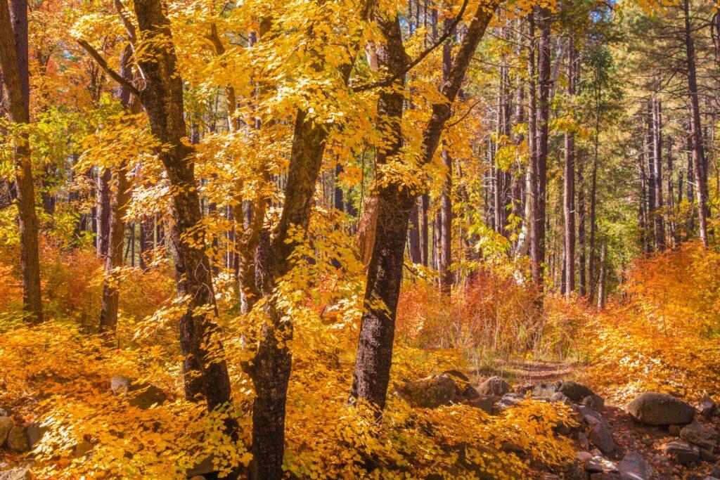 Fall leaves in Sedona, Arizona.