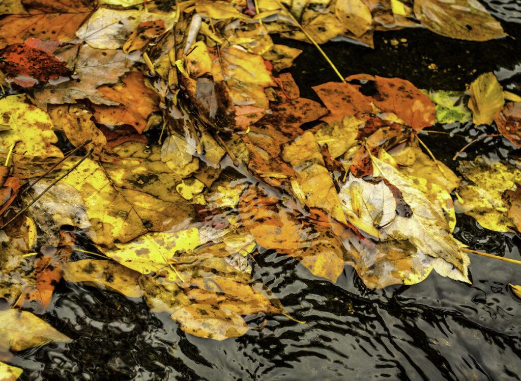 Fallen leaves at Fall Creek Falls.