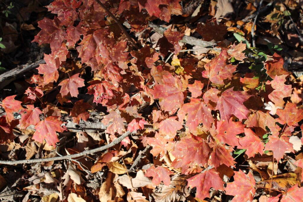 Fallen leaves in Blount County, Alabama.