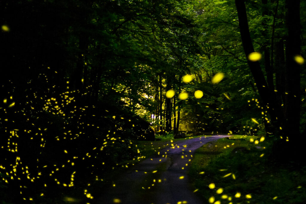 Fireflies in the Smoky Mountains