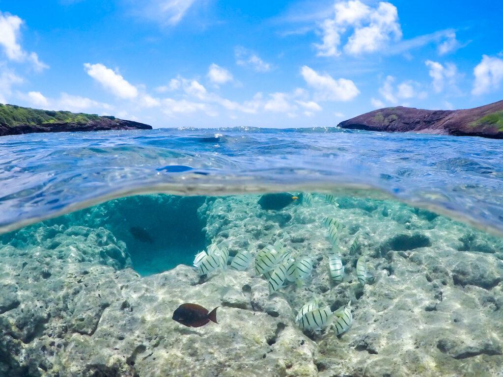 Fish among the coral reef at Hanauma Bay in Hawaii.