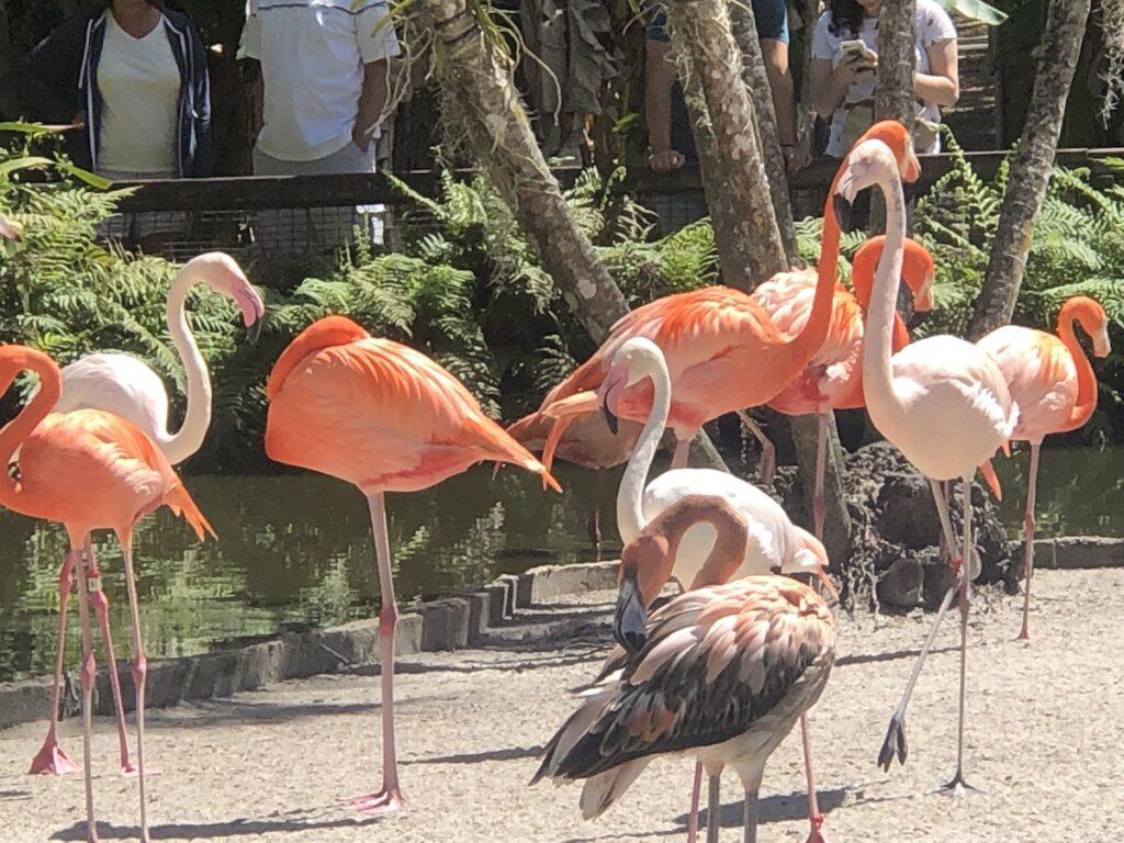 Flamingo Gardens in the town of Davie, Florida.