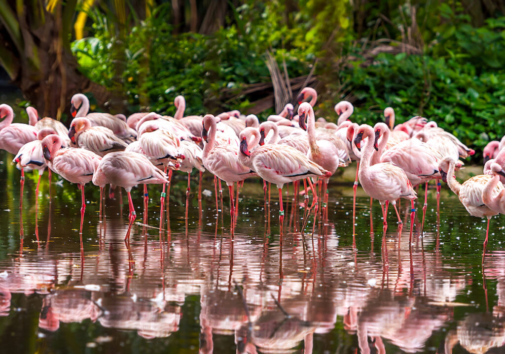 Flamingoes at Everglades National Park in Florida.