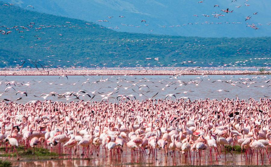 Flamingos in Kenya's Nakuru National Park.