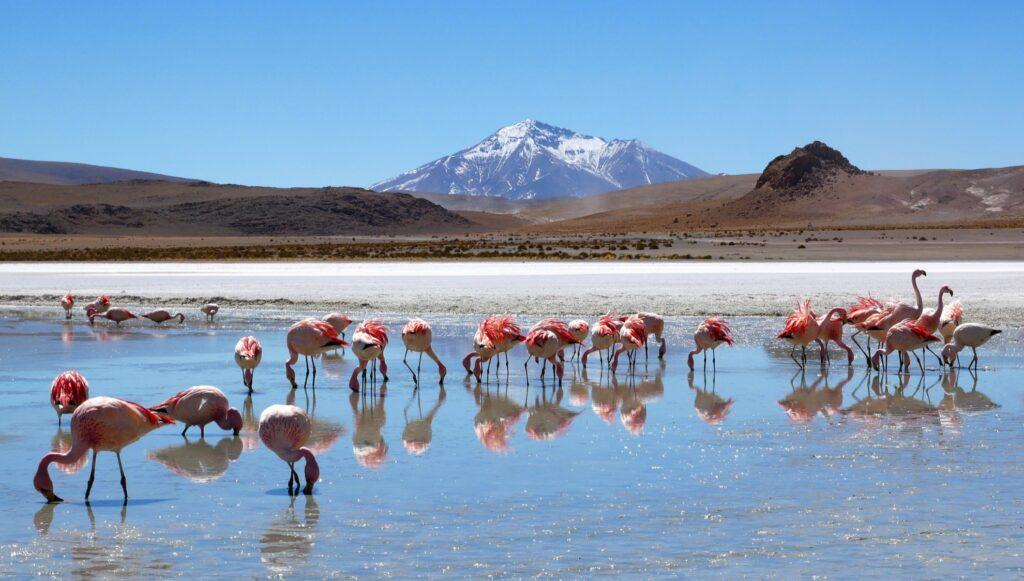 Flamingos near Salar De Uyuni, Bolivia.