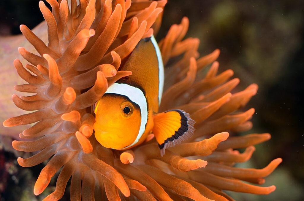 Florida Aquarium, Tampa, FL.