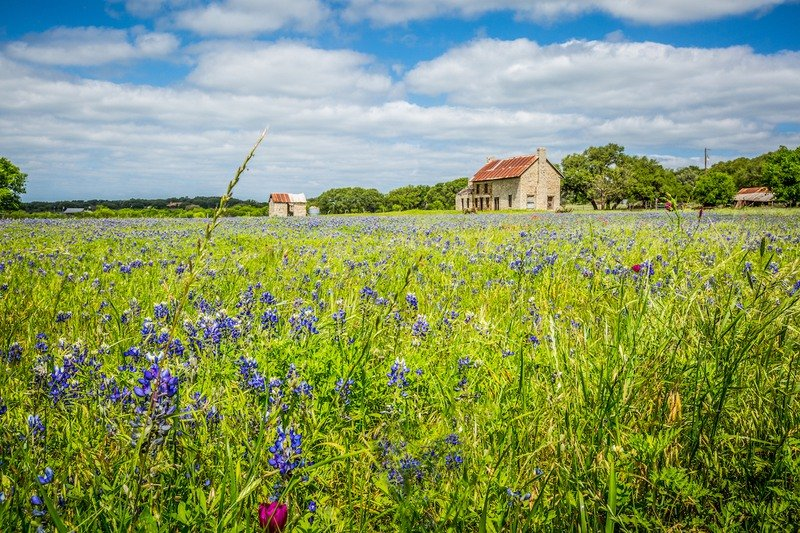 Flower field and farm buildings outside Marble Falls, Texas