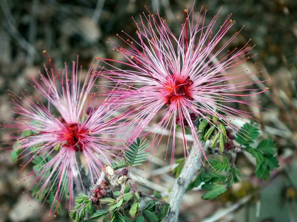 Flowers at the Desert Botanical Garden in Phoenix.