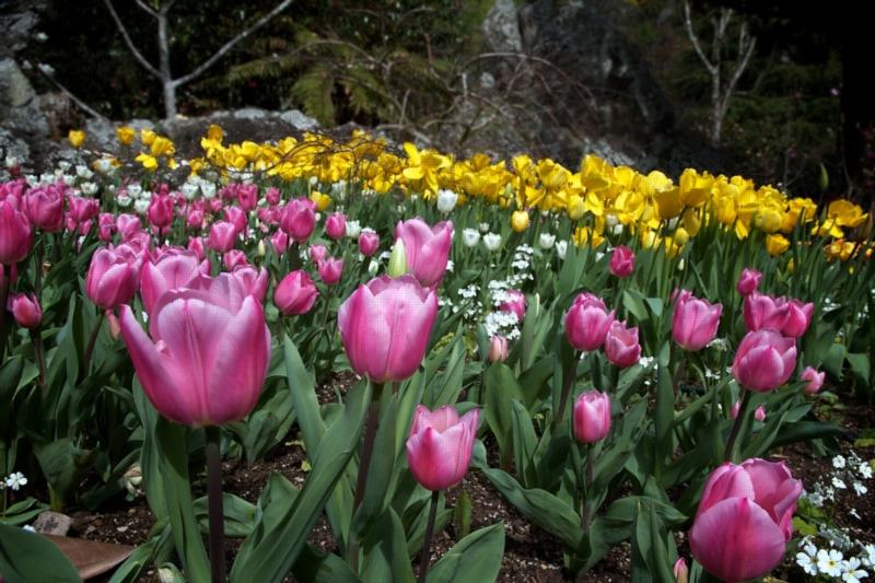 Flowers in Auckland's Eden Garden.