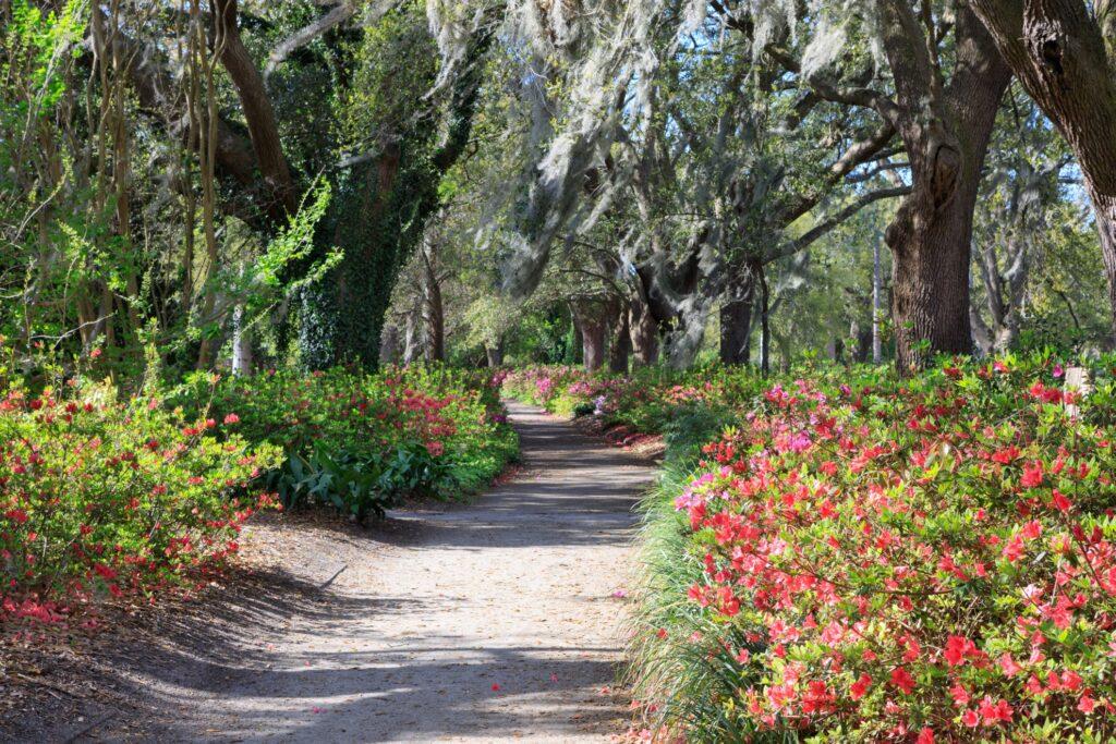 Flowers in Charleston's Hampton Park.
